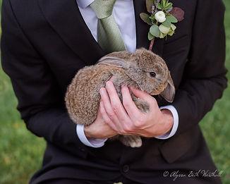 bunnywedding.jpg