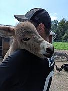 donkey1.jpg