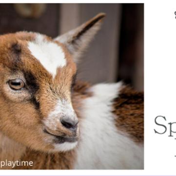 Goat Yoga- August 21