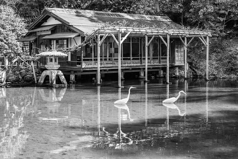 the Tea House and the Egrets