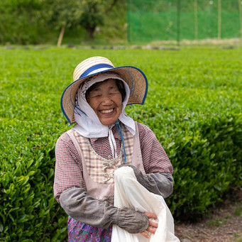 Green Tea Farmer