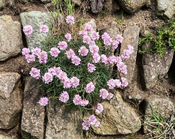 Flora_0344.jpg