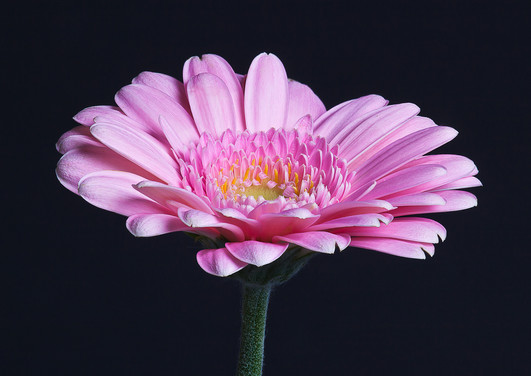 Flora_0333.jpg