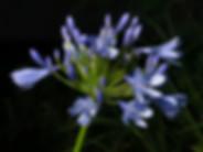 270719_flowers_0021-Edit.jpg