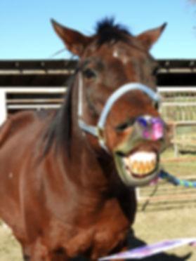 horse 17.jpg