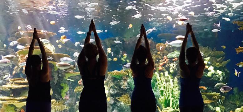 envents_myrtle beach__dmc_ripleys aquari