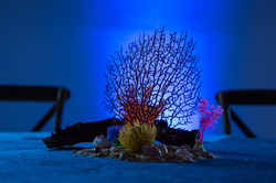 under the sea event_corporate events_gal