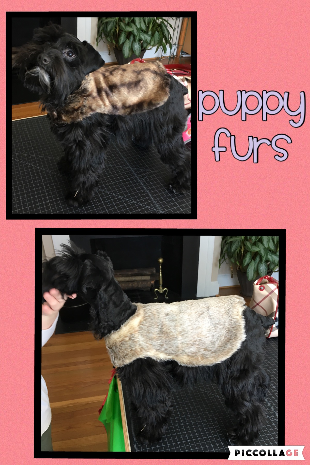 Fur Coats for your puppys