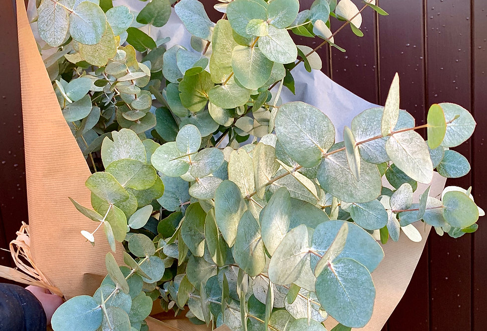 The Eucalyptus Wrap