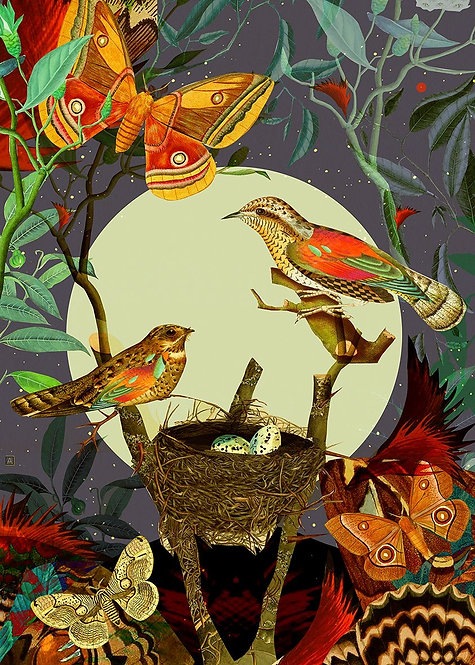 Botanical composition with birds and moths (NIGHT)