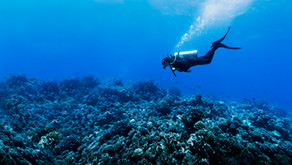 The Great Barrier Reef - Not all Hope Lost