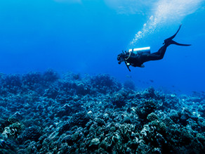 Top 10 Ways to Dive Responsibly