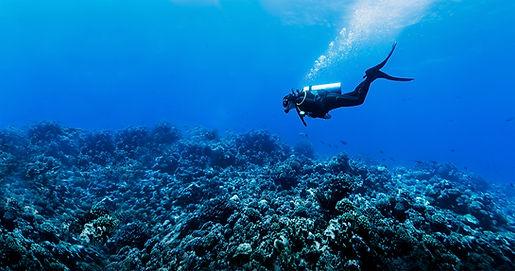 Resif içinde Scuba Diver