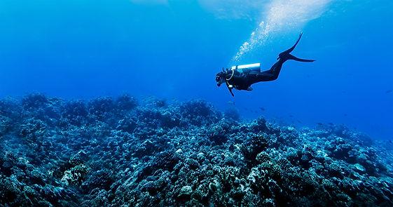 Plongée sous-marine dans le récif