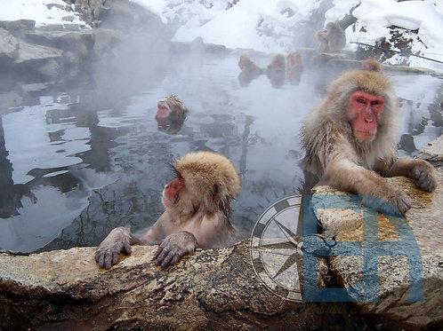 Snow Monkey Onsen