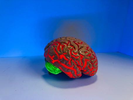 Teen's Brain