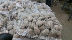 15 kg maišeliai