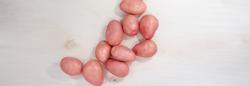 Laura potato variety