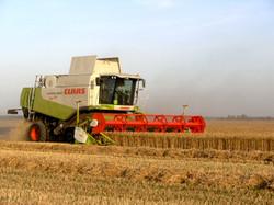 Crop harvest