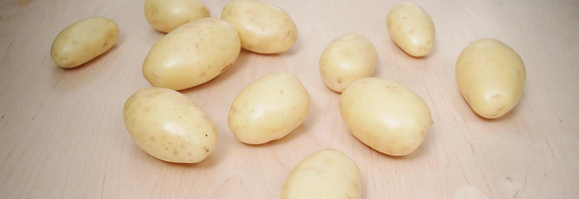 Queen Anne potato variety