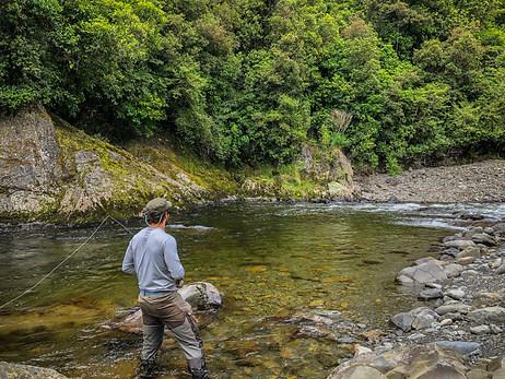 Wellington Fishing Trips