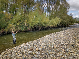 Manawatu Fly Fishing