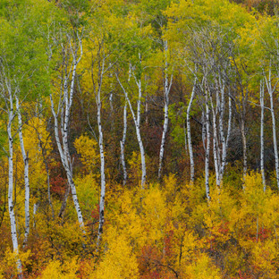fall mink creek pocatello.jpg