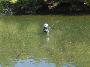 Waist deep and Fishing