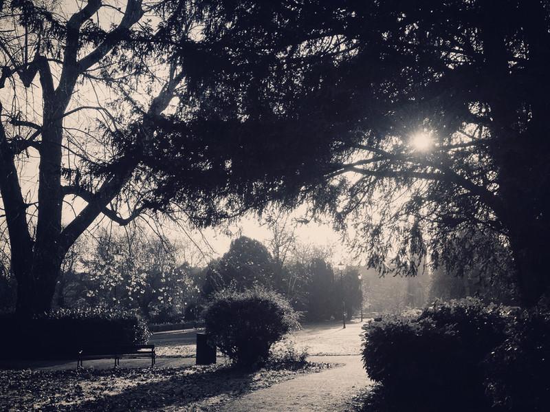 b&w_gardens1.JPG