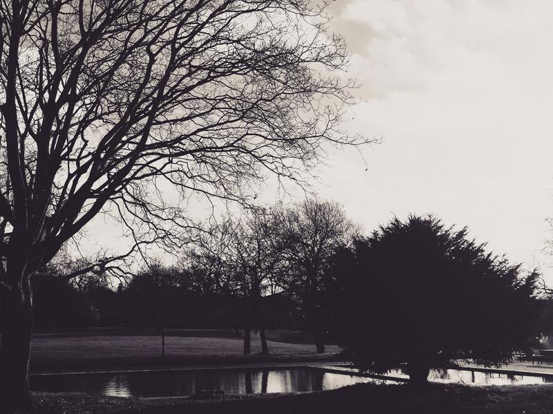 b&w_gardens3.JPG
