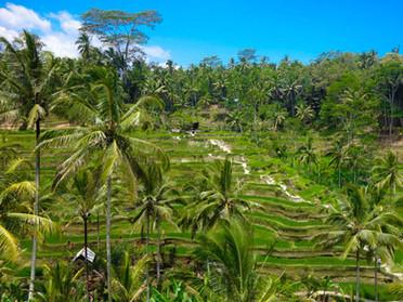 AkashaYoga-Bali5.jpg