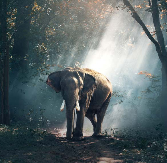 Elephants : Where can I see them in Thailand?