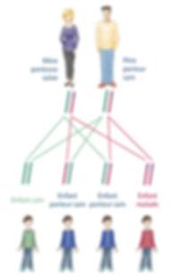 Schéma transmission génétique héréditaire mucoviscidose