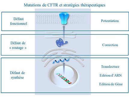 Schéma mucoviscidose mutations CFTR stratégies thérapeutiques