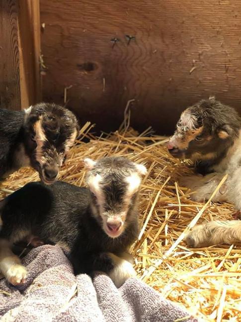 New Born kids