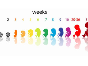 Fetal Growth Chart Week by Week – Growing Weight of the Baby