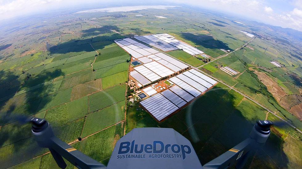 Industria agroforestal BlueDrop