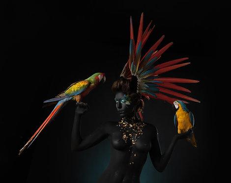 Trio Macaws