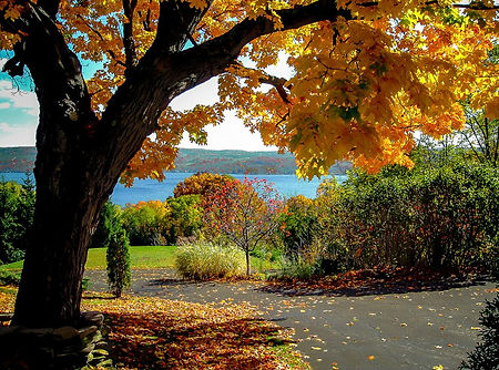 003 - Fall view from driveway.jpg