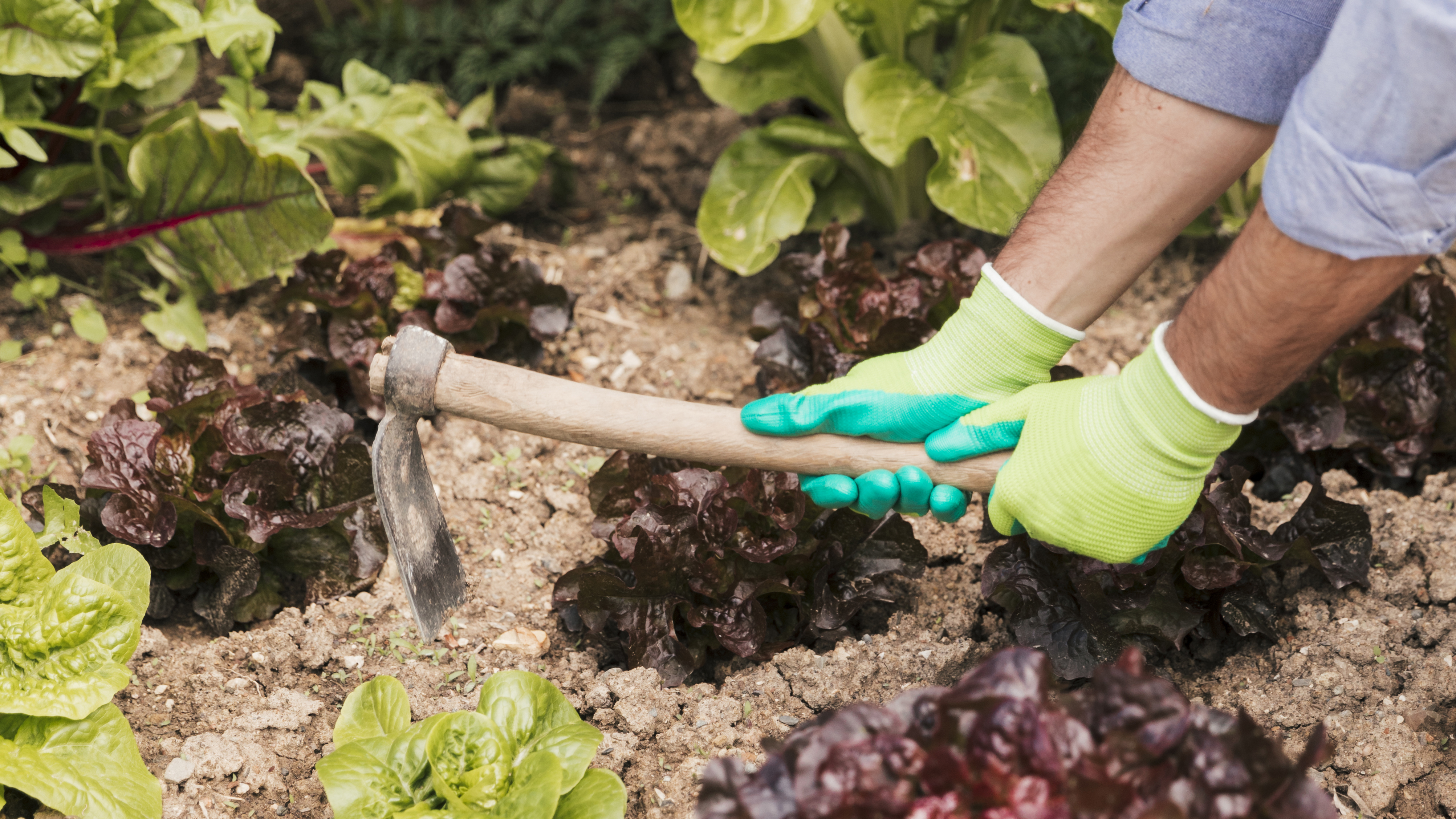 male-gardener-s-hand-digging-the-soil-in