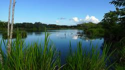 lake view II.JPG