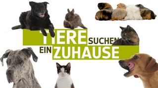 """Blick hinter die Kulissen der WDR Sendung """"Tiere suchen ein Zuhause"""", Köln"""