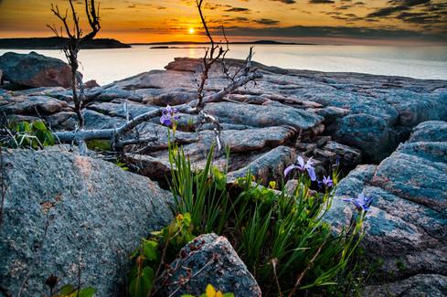 Acadia_NP_0001.jpg