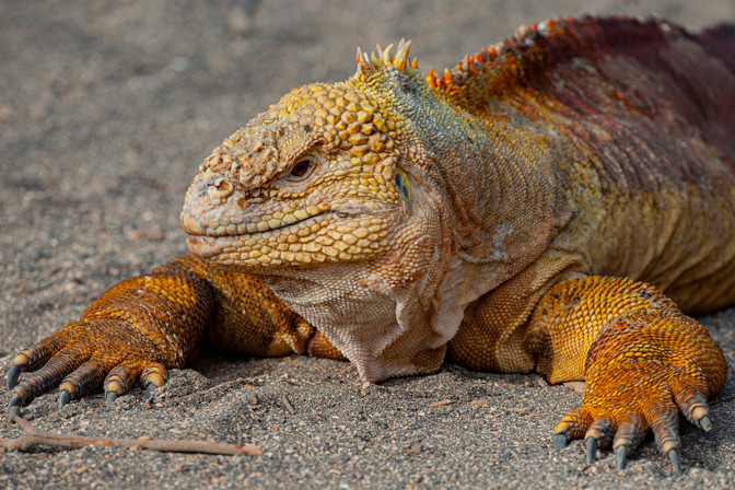 Galapagos_0022.jpg