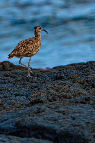 Galapagos_0005.jpg