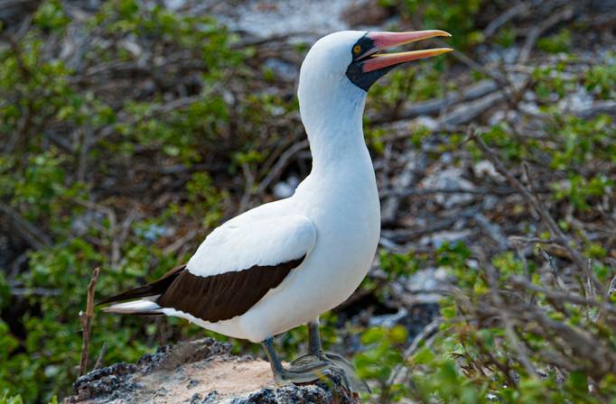 Galapagos_0007.jpg