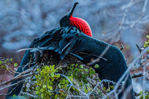 Galapagos_0009.jpg