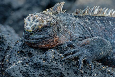Galapagos_0017.jpg