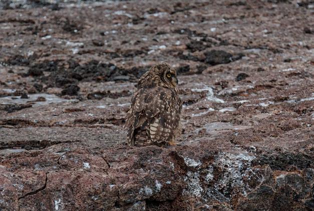 Galapagos_0016.jpg