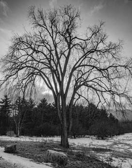 Adirondack_Park_0004.jpg